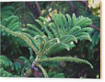 Norfolk Island Pine Frond Wood Print