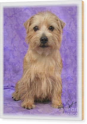 Norfolk Terrier Pup Wood Print by Maxine Bochnia