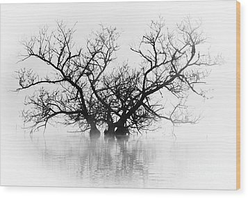 Norris Lake April 2015 5 Wood Print by Douglas Stucky