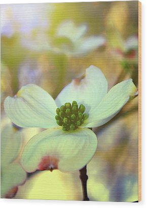 Wood Print featuring the painting North Carolina Dogwood State Flower by Gray  Artus
