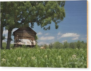 Wood Print featuring the photograph North Carolina Tobacco by Benanne Stiens