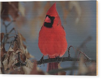 Wood Print featuring the photograph Northern Cardinal by Mike Martin