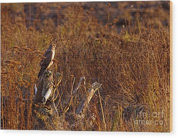 Wood Print featuring the photograph Northern Harrier At Sunset by Sharon Talson