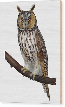Northern Long-eared Owl Asio Otus - Hibou Moyen-duc - Buho Chico - Hornuggla - Nationalpark Eifel Wood Print