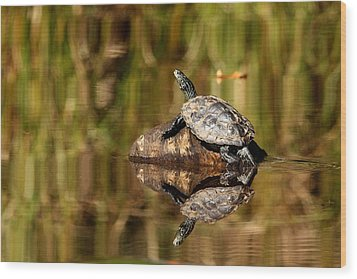 Northern Map Turtle Wood Print by Debbie Oppermann