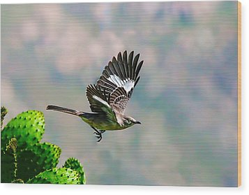 Northern Mockingbird Flying Wood Print
