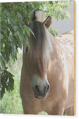 Norwegian Fjord Horse In The Shade Wood Print by Laurie With