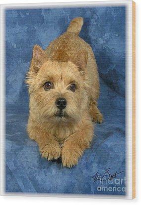 Norwich Terrier Pup Wood Print by Maxine Bochnia