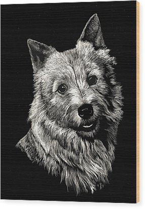 Wood Print featuring the drawing Norwich Terrier by Rachel Hames