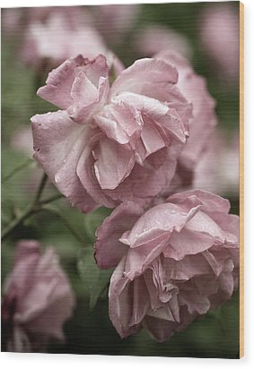 Wood Print featuring the photograph Nostalgic Roses by Frank Tschakert
