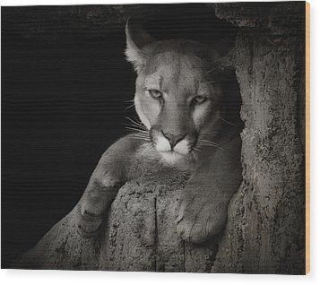 Not A Happy Cat Wood Print by Elaine Malott