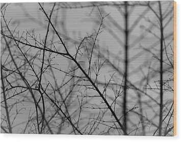 Wood Print featuring the photograph Not Quite Spring by Andrew Pacheco