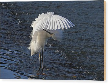 Wood Print featuring the photograph Not Under Here - Birds - Snowy Egret by HH Photography of Florida