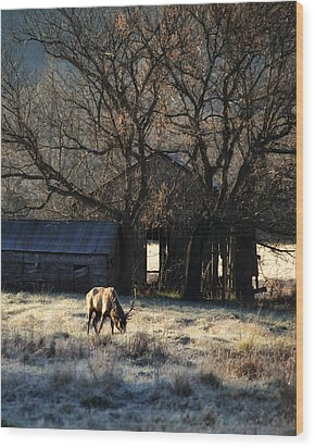 Wood Print featuring the photograph November Sunrise by Michael Dougherty