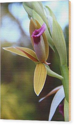 Nun's Cap Orchid - 1 Wood Print
