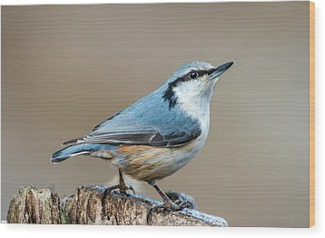 Wood Print featuring the photograph Nuthatch's Pose by Torbjorn Swenelius