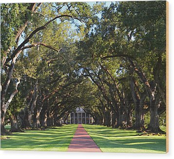 Oak Alley Plantation Wood Print by Maggy Marsh