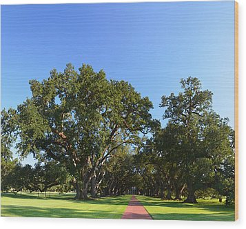 Oak Alley Plantation Panoramic Wood Print by Maggy Marsh