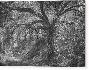 Wood Print featuring the photograph Oak And Trail by Alexander Kunz