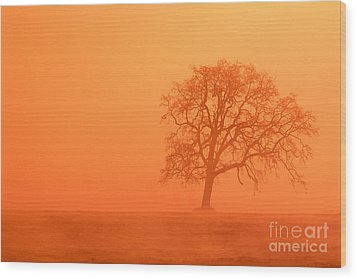 Oak At Sunrise Wood Print by Greg Vaughn - Printscapes