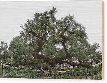 Wood Print featuring the photograph Oak by Cecil Fuselier