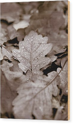 Oak Leaf Wood Print by Frank Tschakert