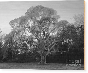 Oak Tree Wood Print by David Lee Thompson
