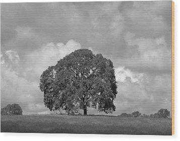 Oak Tree On Hill Wood Print