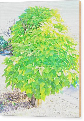 Wood Print featuring the photograph Obese American Tree by Lenore Senior
