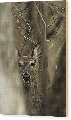 Observed  Wood Print by Bruce Patrick Smith