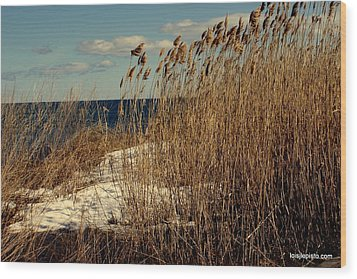 Ocean View Through The Grasses Wood Print by Lois Lepisto