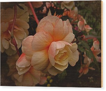 Wood Print featuring the photograph Vintage Begonia No. 2 by Richard Cummings