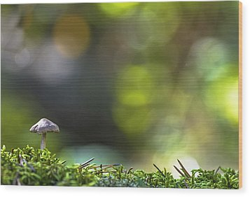 Ode To A Mushroom Wood Print by Mary Amerman