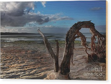 Ode To The Estuary Wood Print by Kym Clarke