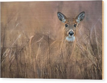 Wood Print featuring the photograph Oh Deer by Robin-Lee Vieira