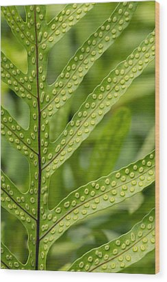 Wood Print featuring the photograph Oh Fern by Christina Lihani