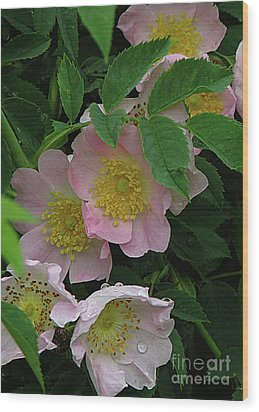 Oh The Wild Rose Bush Wood Print by Deborah Johnson