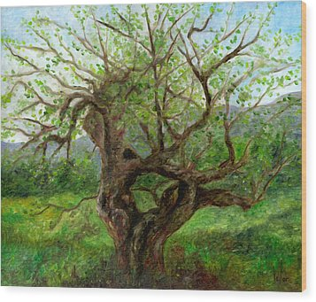 Old Apple Tree Wood Print by FT McKinstry