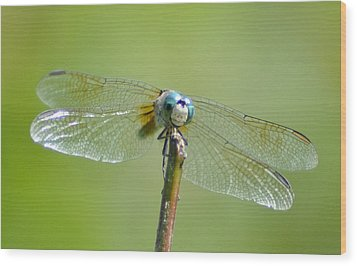 Old Blue Eyes - Blue Dragonfly Wood Print by Bill Cannon