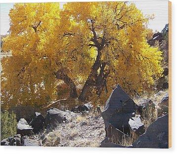 Old Cottonwood Below Black Rocks Wood Print