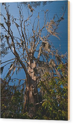Old Cypress Wood Print by Christopher Holmes