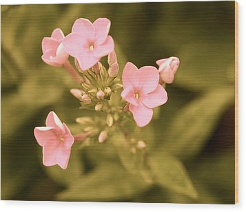 Wood Print featuring the photograph Old Fashioned Spring by Corinne Rhode