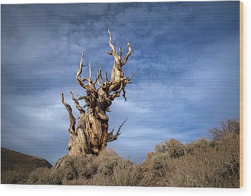 Wood Print featuring the photograph Old Friend by Sean Foster