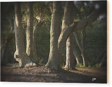 Wood Print featuring the photograph Old Friends Meet In The Woods by Phil Mancuso