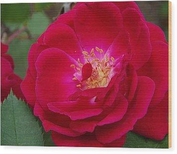 Old Homestead Rose Wood Print