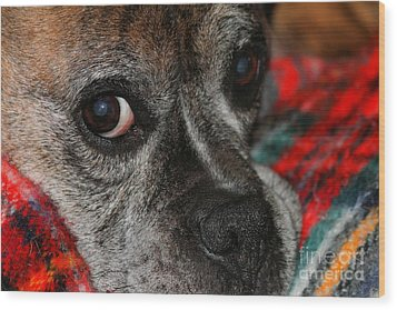 Wood Print featuring the photograph Old Man Boxer by Debbie Stahre