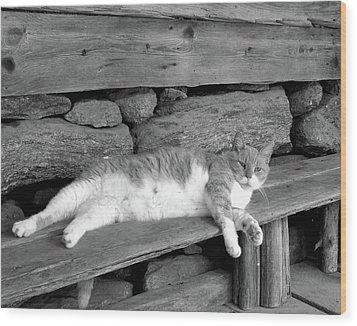 Wood Print featuring the photograph Old Mill Cat by Sandi OReilly