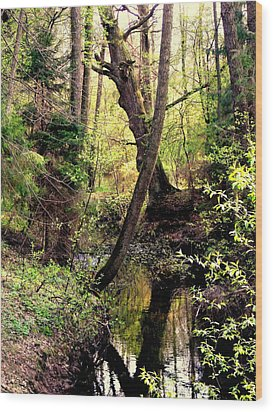 Old Oak Wood Print by Henryk Gorecki