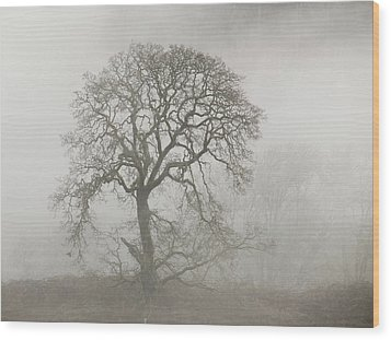 Wood Print featuring the photograph Old Oak Tree And Fog by Angie Vogel