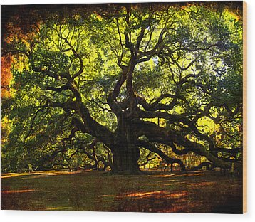 Old Old Angel Oak In Charleston Wood Print